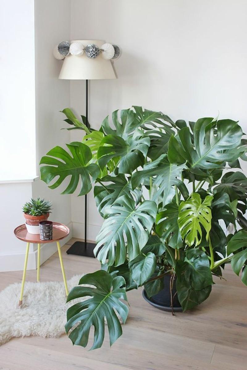 Giftige Zimmerpflanzen giftige zimmerpflanzen 20 giftpflanzen die sie kennen sollen
