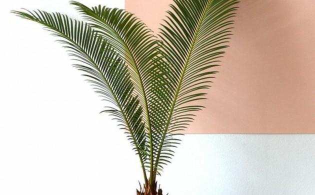 Garten pflanzen ber 1000 ideen f r gartengestaltung - Giftige zimmerpflanzen ...