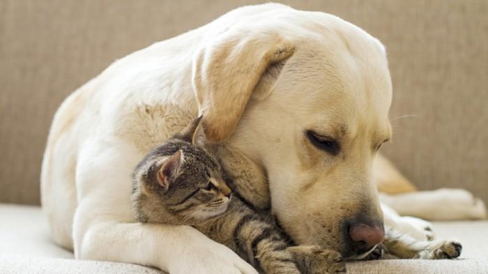 haustiere kaufen hunde katzenrassen