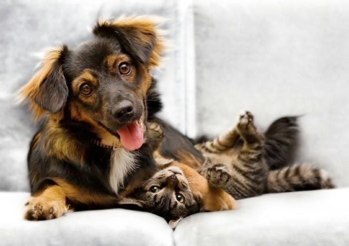 haustiere kaufen hunderassen katzen