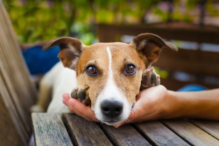 haustiere kaufen hunderassen