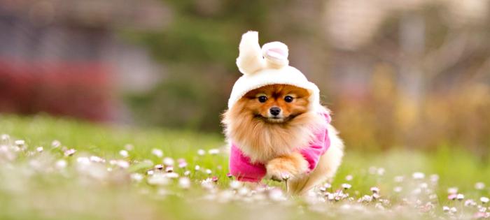 haustiere kaufen hunderassen sommer hund