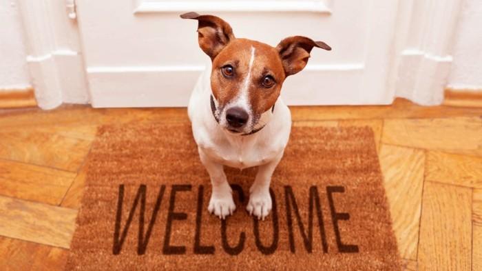 haustiere kaufen hunderassen zuhause hund jack russel