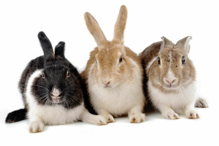 haustiere kaufen kaninchen