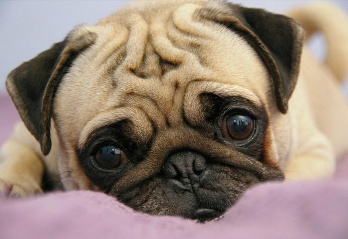 haustiere kaufen süsser hund hunderassen