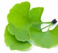 Top 8 Heilkräuter und Pflanzen, die  Asthma bekämpfen können