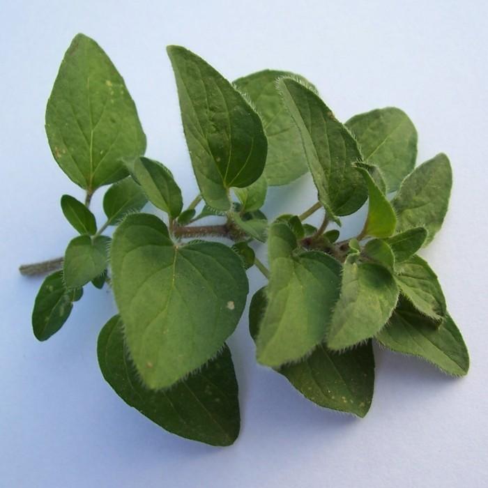 heilkräuter lebe gesunf zitronengrass lakritze