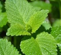 4 wirkungsvolle Heilkräuter und Pflanzen, die Viren bekämpfen