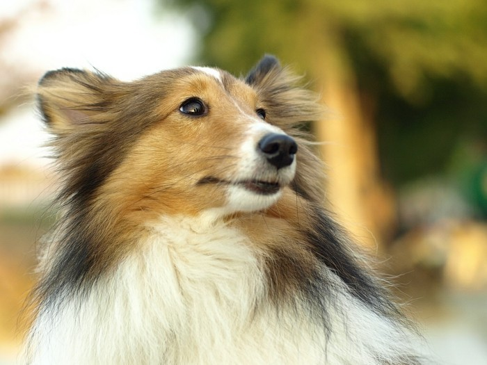 hundehaare hygiene richtige pflege