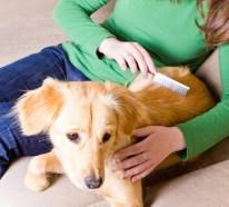 Hundehaare – wie hält man seine Wohnung am besten stubenrein?