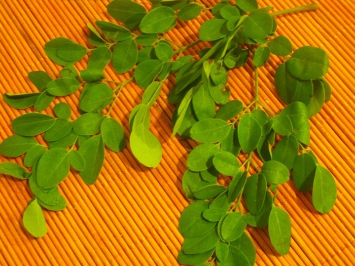 moringa blätter gesundheit lifestyle