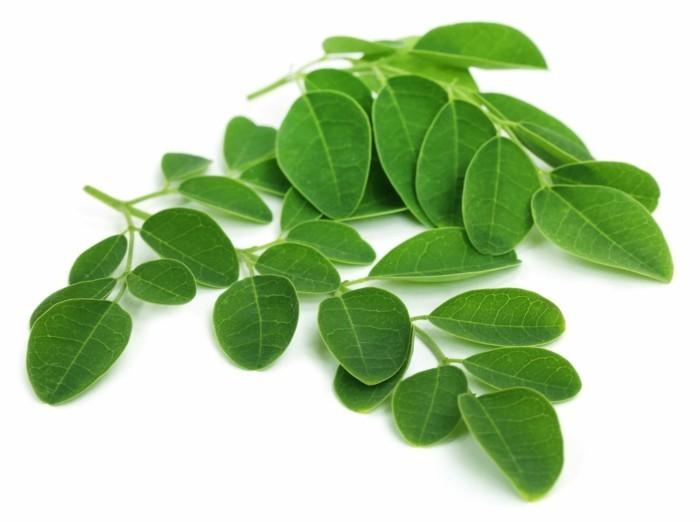 moringa blätter vorteile gesundheit tipps