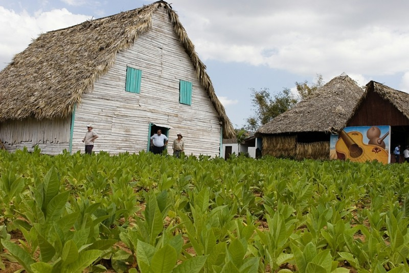 Kuba Reise cuba vinales tobacco farm