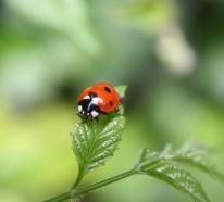 Effektive Schädlingsbekämpfung im eigenen Garten