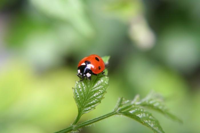 schädlingsbekämpfung naturale mittel biozide