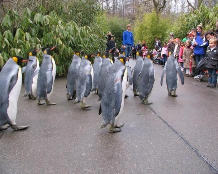 weltreise planen basel zoo pinguine spaziergang