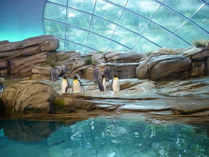 weltreise planen berliner zoo pinguine