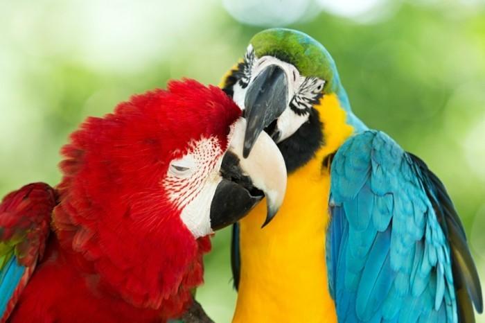weltreise planen pretoria zoo südafrika bunte ara papageien