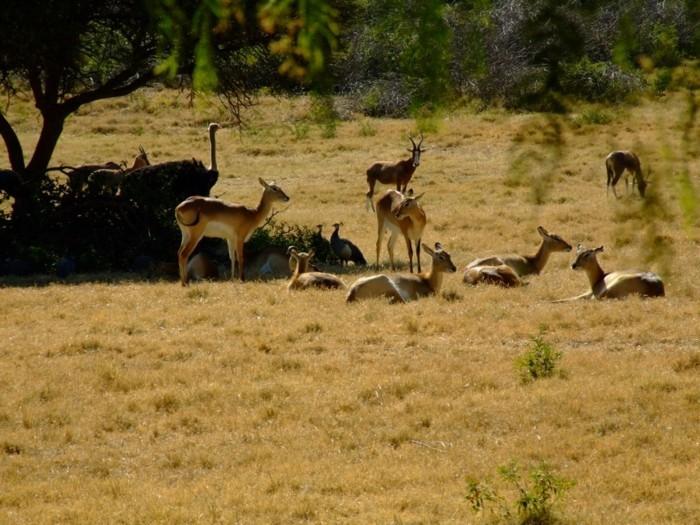weltreise planen pretoria zoo südafrika wildlife antilopen