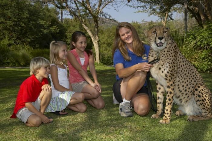 weltreise planen san diego kalifornien usa jaguar
