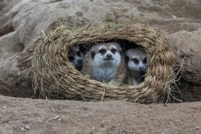 weltreise planen san diego zoo usa erdmännchen
