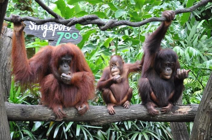 weltreise planen zoo singapur affenfamilie