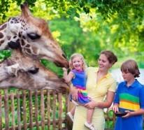 Weltreise planen – besuchen Sie die schönsten Zoos der Welt!