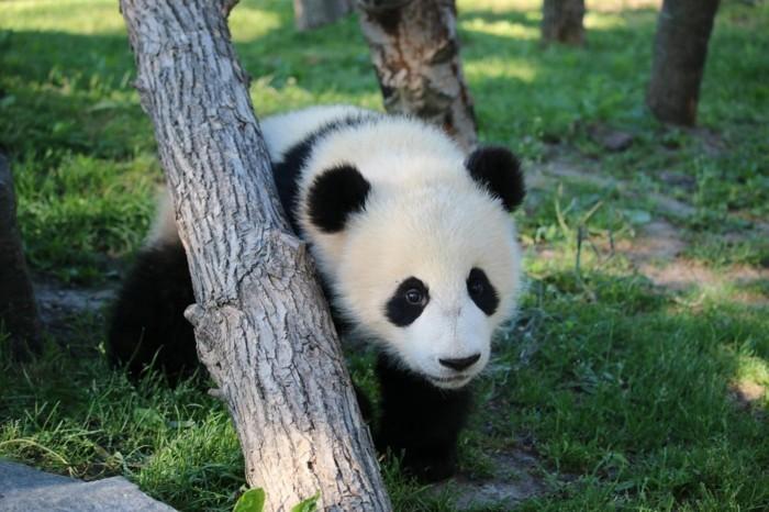 weltreise planen zoo toronto kanada panda