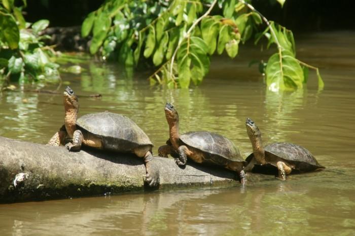 weltreisen weltreise costa rica ferien natur park vulkan schildkröten