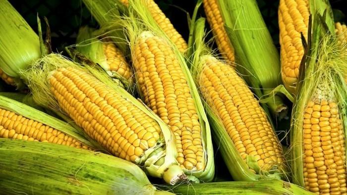 gesundes essen kornprodukte proteine