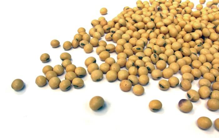 gesundes essen soja pflanzliche proteinquellen
