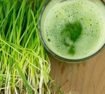 Weizengras Samen und Keime- Die gesunden Unbekannten