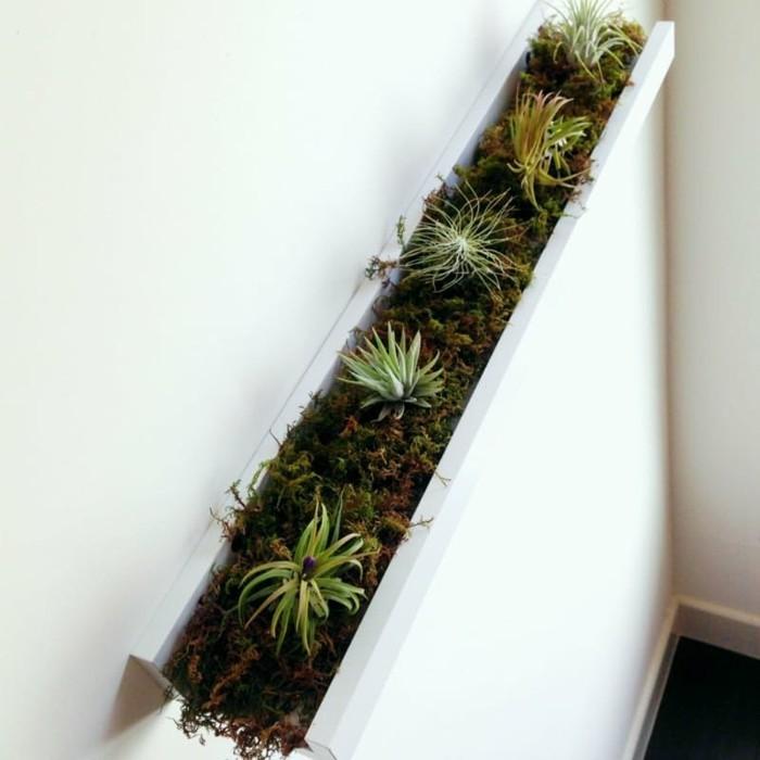bilderleisten diy ideen zimmerpflanzen pflegeleicht sukkulenten