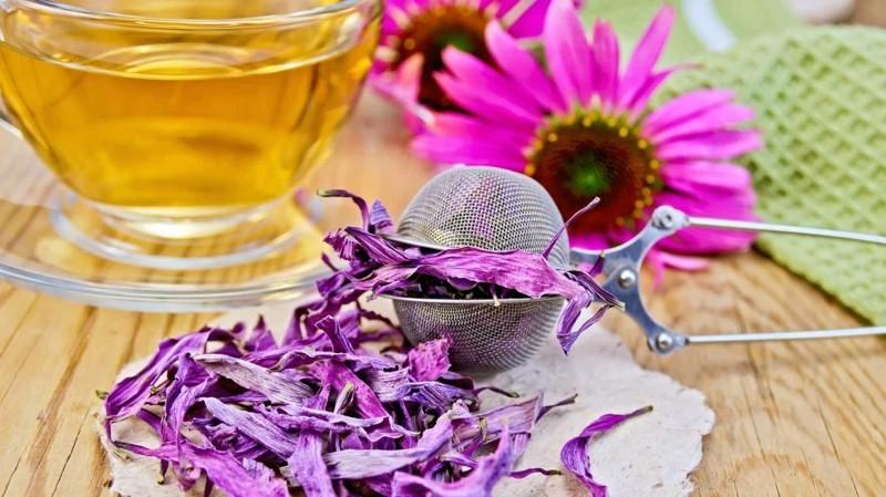 echinacea purpurea tee erkältung stoppen und vorbeugen