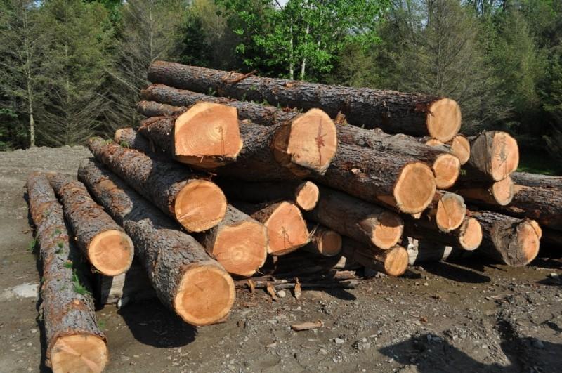 laerchenholz vorteile wald holzmaterial