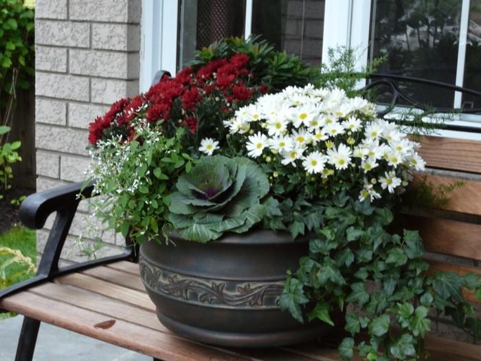 gartenideen dekorativer blumenkohl gartenpflanzen blumentopf