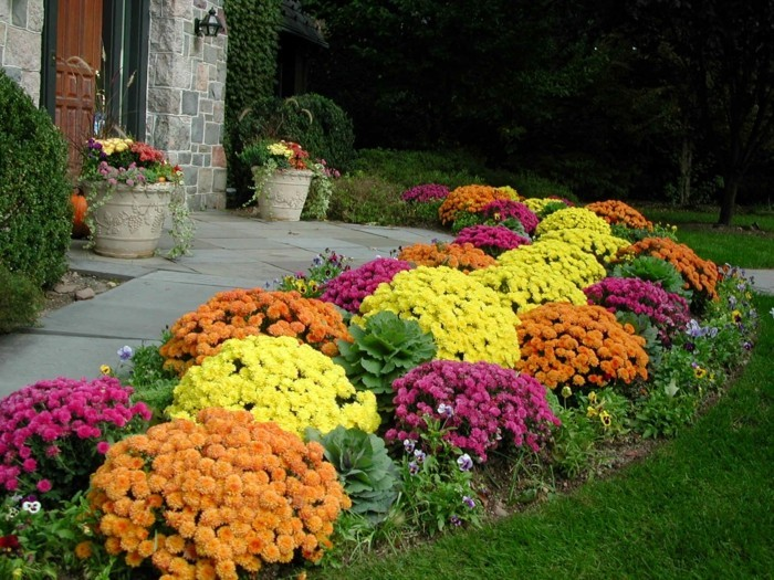 wie gestalte ich meinen garten chrysanthemen farbig dekoideen herbst