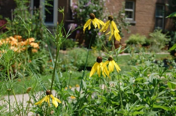 wie gestalte ich meinen garten gelbe rudbeckien gartenpflanzen herbst