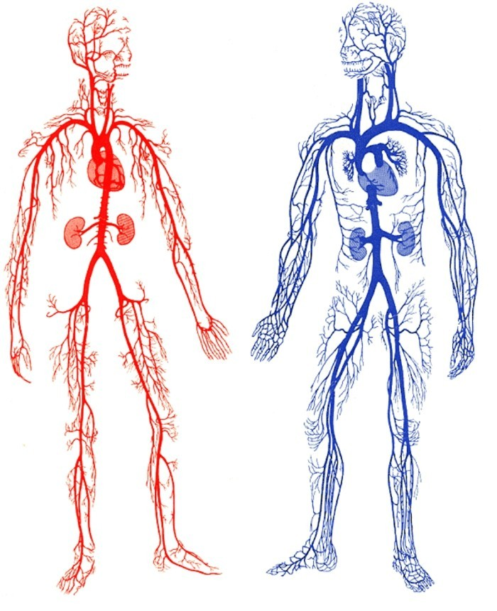 Wo sind die Lymphknoten und wie erkennen wir sie?