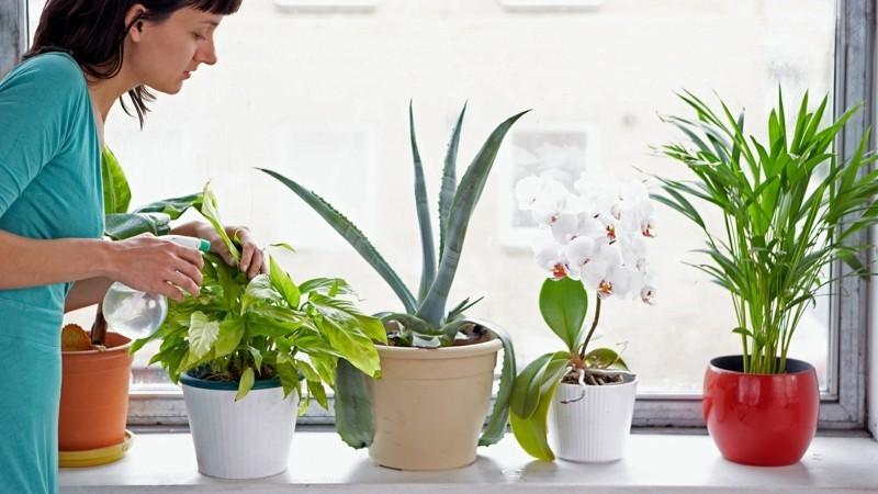 gesund leben zimmerpflanzen fenster frische luft gesunde ernaehrung