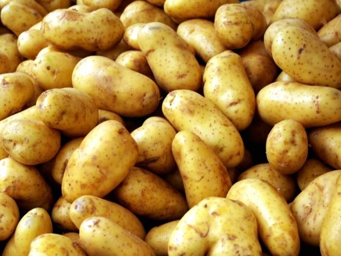 lebe gesund kartoffeln richtig aufbewahren tipps