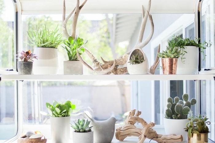 hochwertige inneneinrichtung dekoideen pflanzen sukkulenten