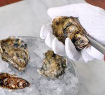 Die vielen leckeren Meeresfrüchte Arten sorgen für Ihre Gesundheit!