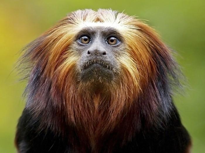 amazonas regenwald affen