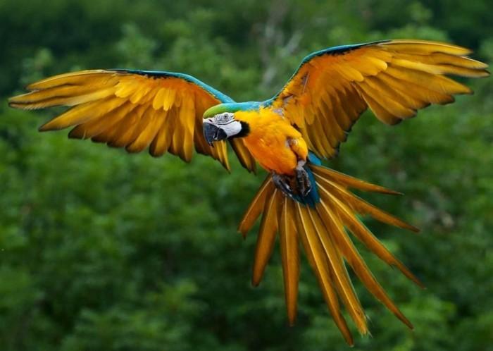 amazonas regenwald papagai