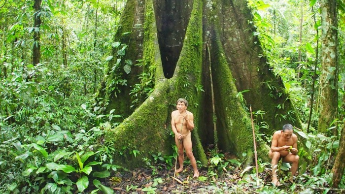 amazonas regenwald stamm