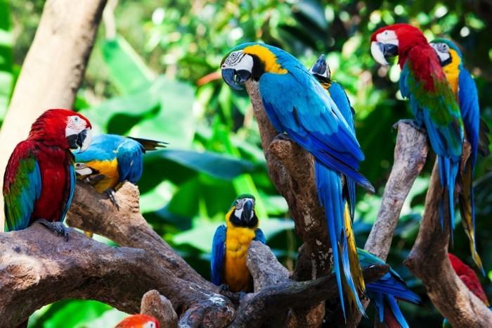 amazonas regenwald voegel