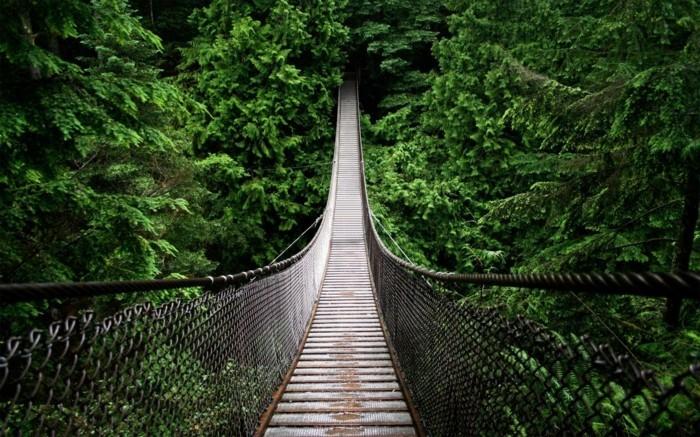 amazonas regenwald wald