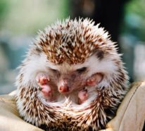 Im Bann der Tiere – Außergewöhnliche Haustiere bringen Sie zum Lächeln!
