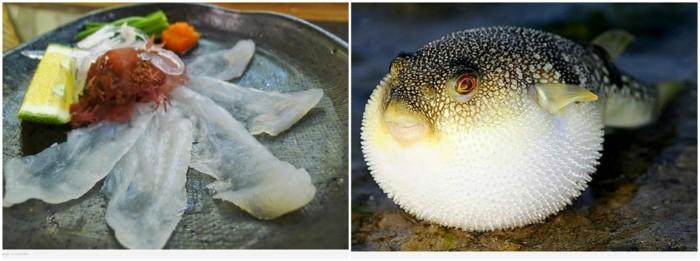 aussergewohnliches essen fugu